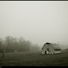 (16Mar09)  misty fog on vaughter's farm.  one year ago.  f/5, 1/1000s, iso 400.