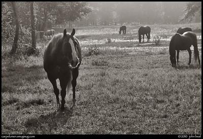 (28Aug10)  little creek horse farm.  one year ago.  f/11, 1/200s, iso 200.