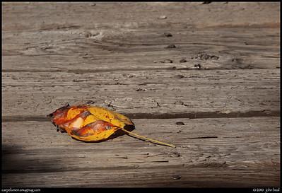 (7Nov10)  autumn leaf on weathered wood.  f/11, 1/640s, iso 400.